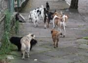 Animais abandonados ainda sofrem em Venâncio Aires, RS