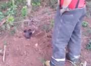 Vídeo de cachorro enterrado vivo no RS causa revolta nos internautas