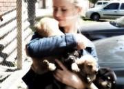 Araquari (SC) dá desconto no IPTU para quem adotar animal