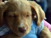 Campanha de Proteção aos Animais no Inverno encerra nesta sexta-feira em Blumenau, SC