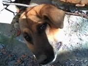 Cão tenta passar por buraco em muro e fica preso em tubulação de água