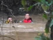 Vídeo mostra resgate de cadela que foi arrastada por correnteza em Joaçaba, SC