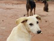 ONG realiza trabalho de conscientização contra maus-tratos à animais em Artur Nogueira, SP