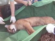 SP bauru oncazoologicobauru05 thumb