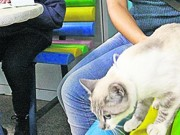 Diadema (SP) cadastra animais para fazer procedimentos de castração de graça