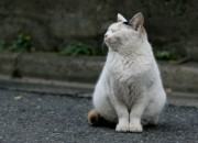 Centro de Controle de Zoonoses intensifica castrações de cães e gatos em Osasco, SP