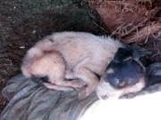 Mulher é multada em R$ 9 mil por maus-tratos contra cães em SP