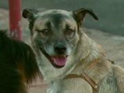 Rio Claro (SP) antecipa vacinação contra a raiva para imunizar 32 mil cães e gatos
