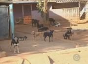 Zoonoses alega que animais de rua 'não é função do orgão' em Rio Preto, SP