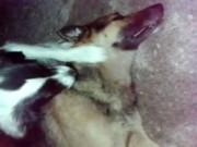 Vídeo mostra cadela em desespero tentando reanimar cão atropelado