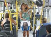 Projeto de lei prevê transporte de animais em ônibus e metrô de SP