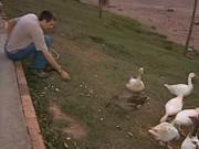 Prefeitura inicia remoção de animais de lago contaminado em Tietê, SP
