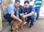 Prefeitura de Gurupi (TO) inicia encoleiramento de cães