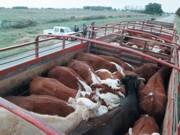Vegetarianos no Uruguai, 'hereges' no país mais carnívoro do mundo