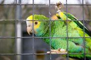 Evento no Jardim Zoológico de BH tenta barrar o tráfico de animais