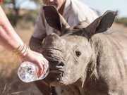AFRICADOSUL rinocerontedesidratadobuzzfeedrepro thumb