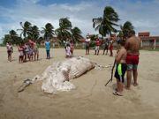 Baleia Jubarte é encontrada morta em Maragogi, Litoral Norte de Alagoas