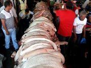 Polícia apreende mais de 2 toneladas de carne de animais silvestres no AM