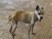 Justiça australiana condena homem a pagar R$10,4 mil por negligência a cão