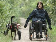 Cão com patas traseiras cortadas ganha cadeira de rodas na Áustria