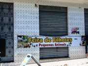 Animais à venda em feira são resgatados por ONG em Brumado, BA
