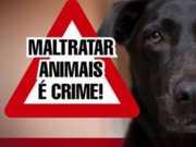 Prefeitura de Lauro de Freitas (BA) cria divisão de proteção animal