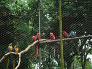 Na Bahia 20 mil animais silvestres são apreendidos por ano na rede de tráfico