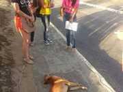 Motorista de ônibus atropela dois cachorros em universidade; estudantes se revoltam