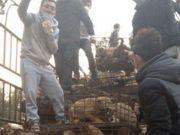 Cães são salvos antes de se tornarem alimentos na China