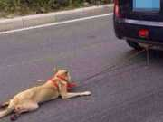 Vídeo com cão sendo arrastado por carro é repudiado na China