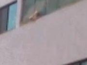 Cachorro é colocado entre janela e tela de proteção de apartamento no DF