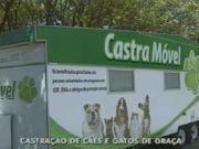 Serviço móvel faz castração gratuita em cães e gatos no DF