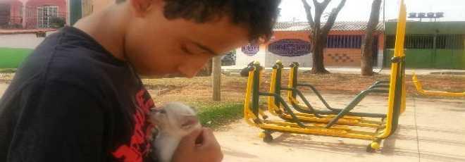 No DF, garoto de 13 anos ouve miado e salva filhote de gato enterrada viva