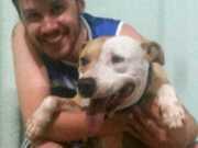 Após maus-tratos, pit bull é adotado por família em Aparecida de Goiânia, GO