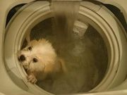 Cachorro 'lavado' em máquina gera revolta em Hong Kong