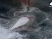 JAPAO baleias CIB843290 thumb