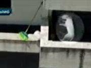 Vídeo: Professor de artes marciais é flagrado arremessando cão contra parede