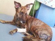 MPE e ONGs buscam tirar das ruas de Cuiabá 11 mil animais abandonados
