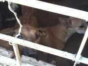 Vereador denuncia maus-tratos a animais na cidade de Sumé, na PB
