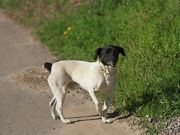 Moradores denunciam desova e mortes violentas de cachorros