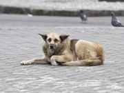 Rede de Proteção Animal de Curitiba descarta site exclusivo para adoção