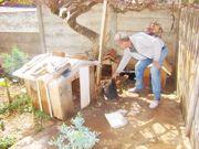 Assassinato de cachorros gera comoção em Wenceslau Braz, PR