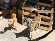 Mulher é presa acusada de maus-tratos contra animais em Itaipuaçu, RJ
