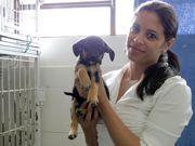 Canil municipal de Teresópolis (RJ) tem 130 cães para adoção