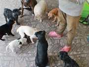 ONG precisa de ajuda para manter cerca de 100 animais, em Parobé, RS