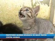 Vídeo: Protetores de animais pedem a criação de delegacia especializada para atender casos de maus-tratos