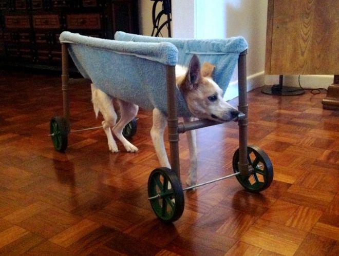 Aprenda a montar uma cadeira de rodas para cachorros tetraplégicos por 100 reais