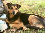 Cão que fazia vigília à espera do tutor é adotado, mas foge em Aguaí, SP