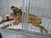 Homem é detido espancando cão com barra de ferro em Jundiaí, SP