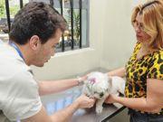 Feira de adoção e exames gratuitos marcam Dia do Veterinário em Presidente Prudente, SP